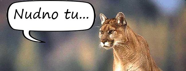 OS X Mountain Lion nadgania zaległości za konkurencją. Co się dzieje z Apple?