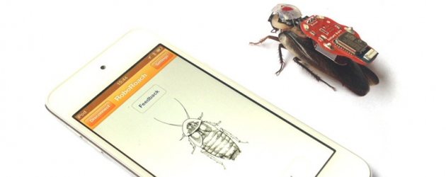 Zdalnie sterowany karaluch to nie zabawa, a barbarzyństwo
