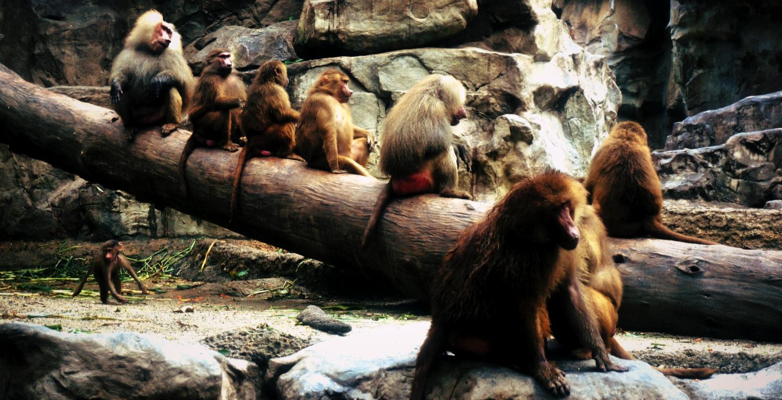 Jeśli ogrody zoologiczne muszą istnieć, to niech wyglądają tak, jak singapurskie Zoo