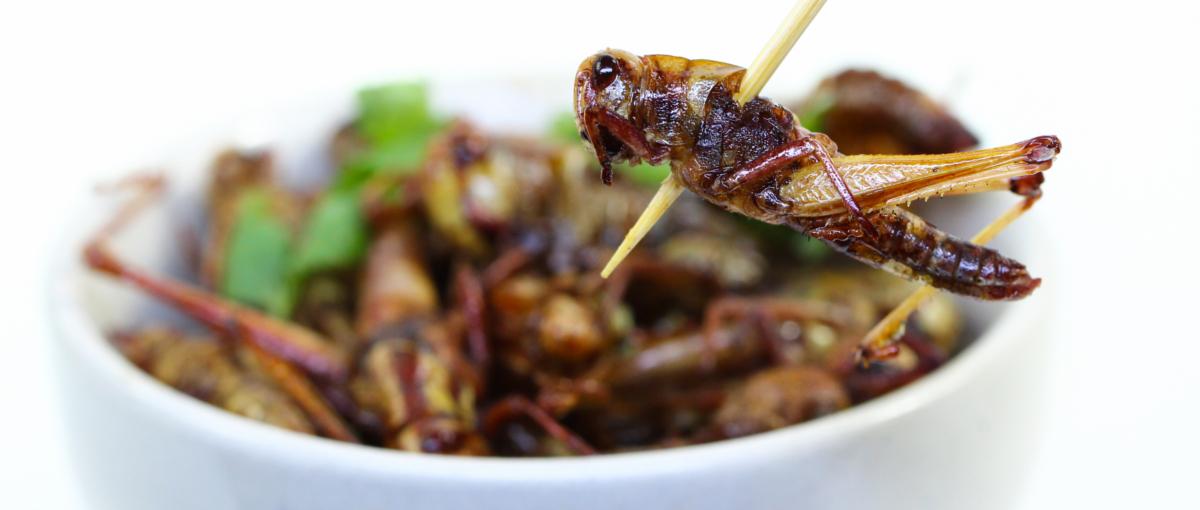 Sztuczna krowa, czy prawdziwe robaki – wybierz swoje ulubione jedzenie przyszłości