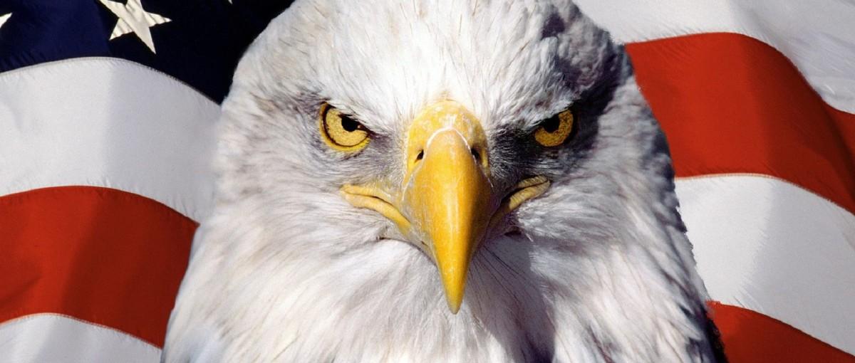 Sezon polowania na drony otwarty – oto niezbędnik myśliwego