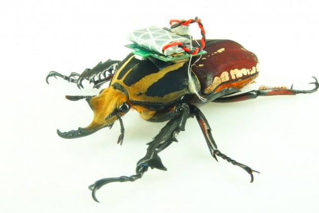 owad2