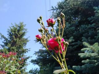 blackberry-priv-zdjecia-9
