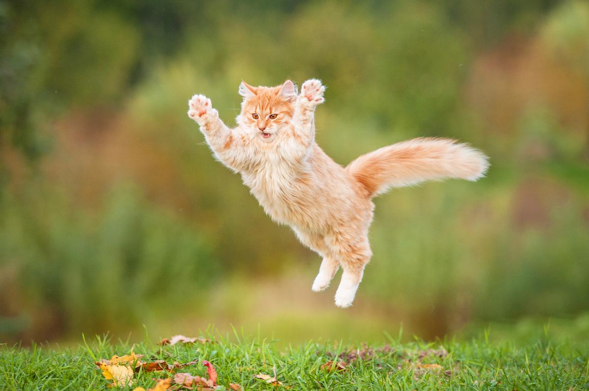 Sprawdzamy Cats GO, czyli Koty – bezczelny klon Pokemon GO z milionami pobrań