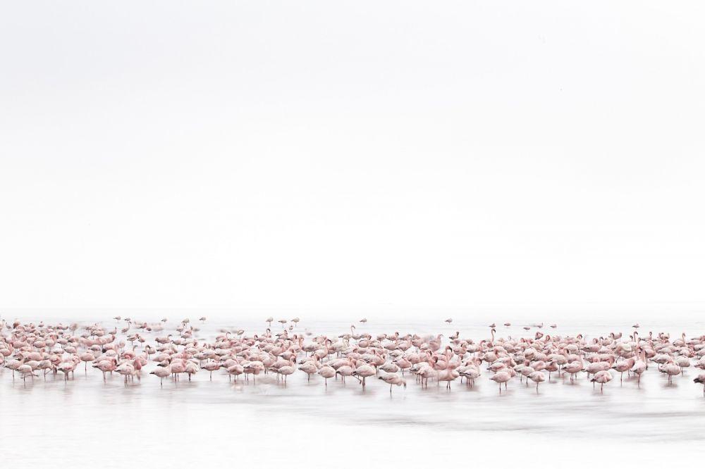 Dzika przyroda — Alessandra Meniconzi (Szwajcaria)