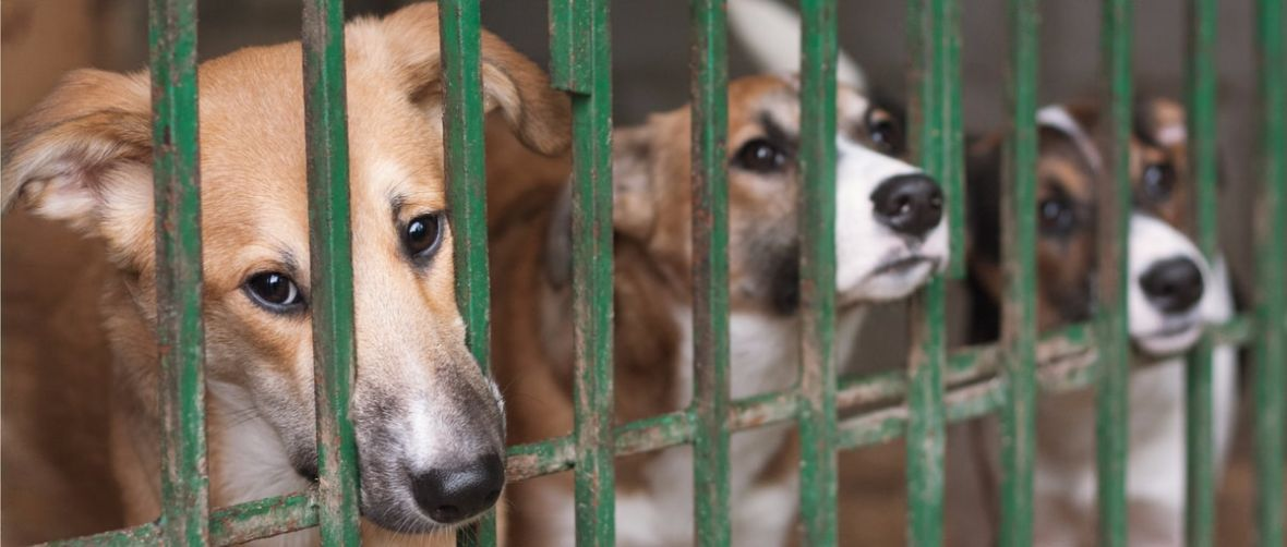 Myślisz o adopcji bezdomnego psiaka? Doświadcz tego w VR