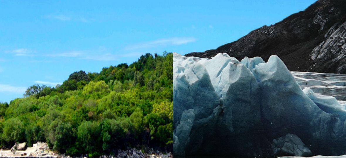 Tu nie powinno być zielono. Globalne ocieplenie zmieni Antarktykę nie do poznania