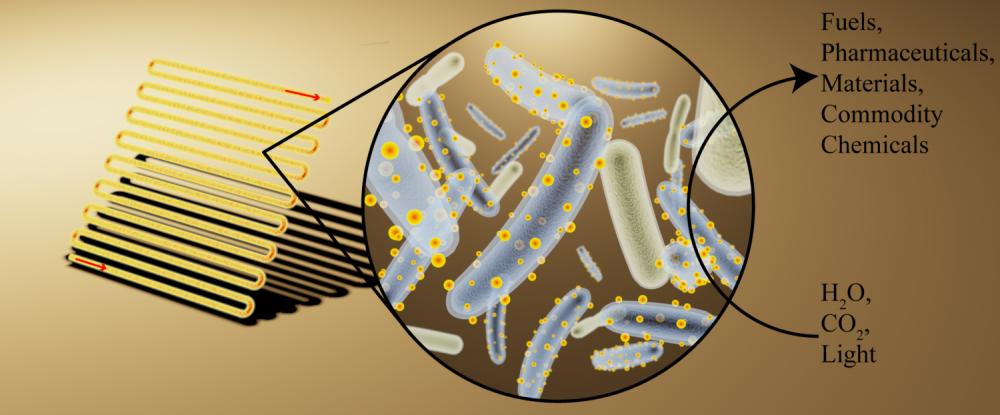 bakteria zywy panel sloneczny
