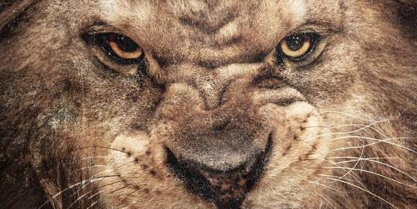 "50 Cent ""Animal Ambition"" - recenzja!"