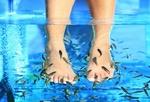 Fot. do artykułu: 'Naturalny pedicure - rybki ...'