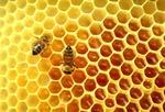 Fot. do artykułu: 'Produkty pszczele poprawiają zdrowie'