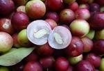 Fot. do artykułu: 'Camu camu - jagoda ...'
