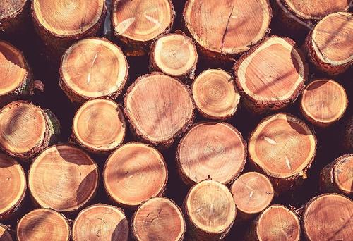 Jak wycinka drzew wpływa ...