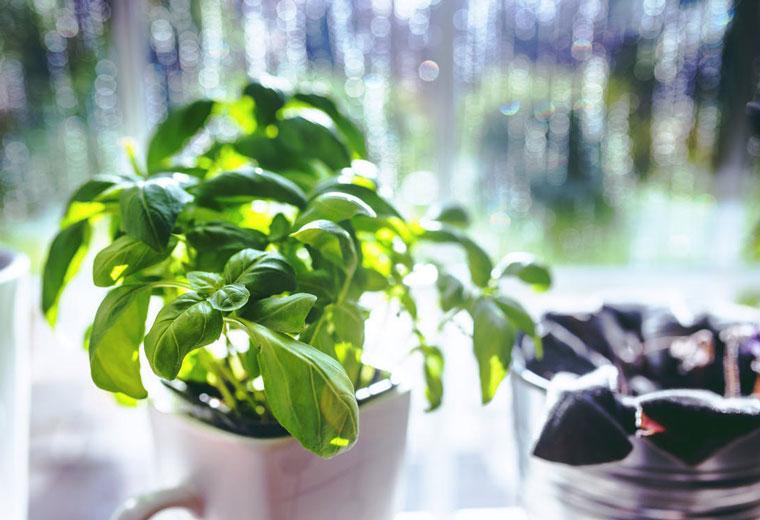 Załóż własny ogród w doniczce