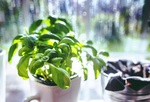 Fot. do artykułu: 'Załóż własny ogród w ...'