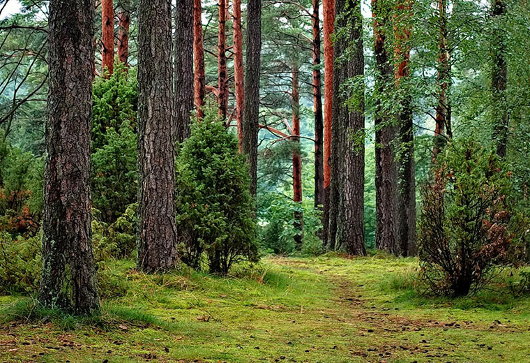 O czym powinieneś pamiętać wybierając się na wycieczkę do lasu?
