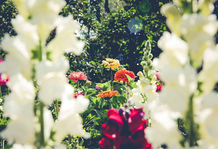 W wakacje nie zapominaj o ogrodzie