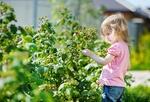 Fot. do artykułu: 'Rośliny i dzieci – ...'