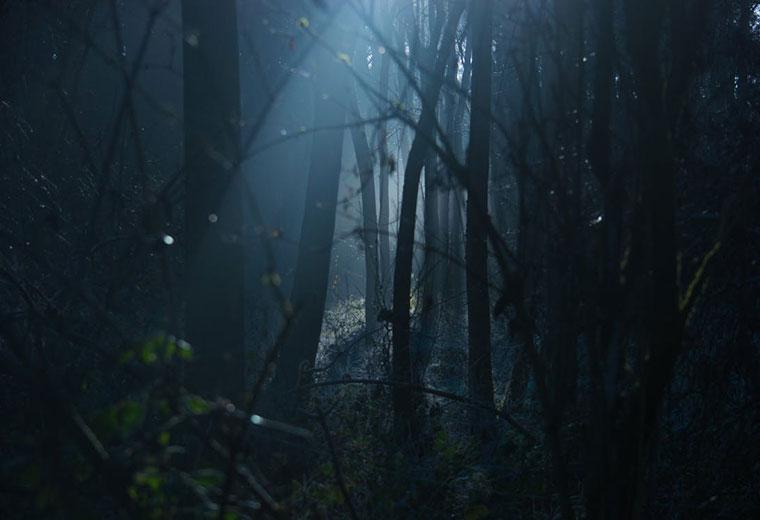 Niebezpieczeństwa czyhające w lesie