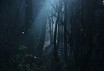 Fot. do artykułu: 'Niebezpieczeństwa czyhające w lesie'