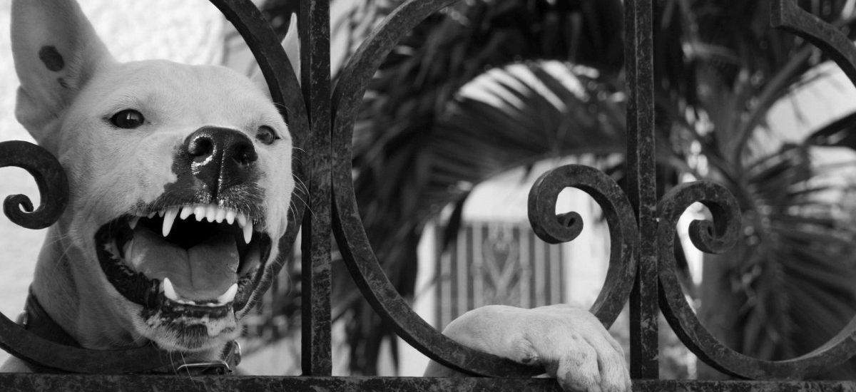 Pies bez kagańca i smyczy może spowodować nie lada kłopoty!