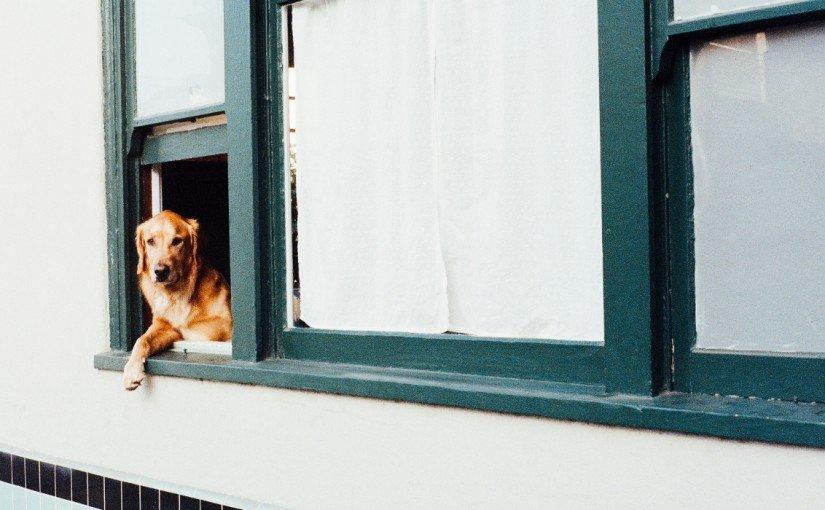 Szczekający pies sąsiada – co robić?