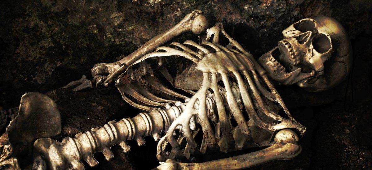 Czaszki, kości i szkielety są… tanie i niemal każdy może je kupić!