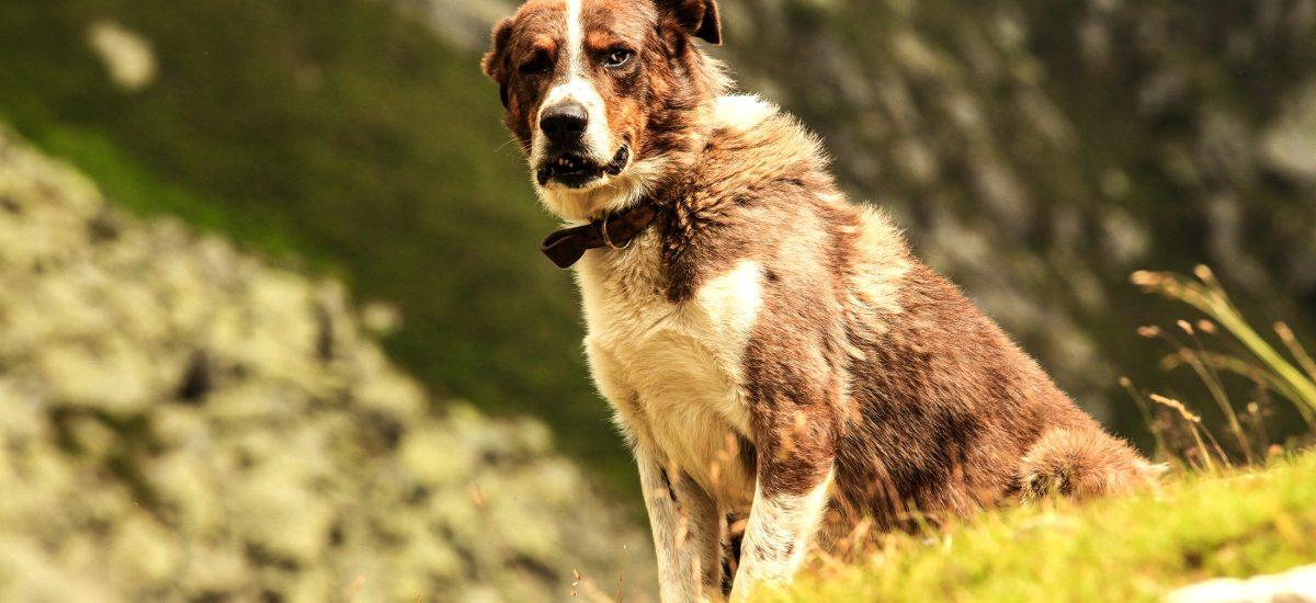 Zakaz wprowadzania psów nie dotyczy psa przewodnika?