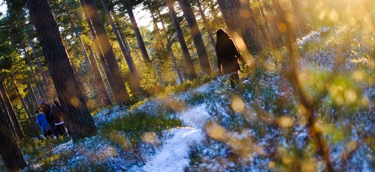 Przepisy dotyczące turystów przebywających na terenach leśnych