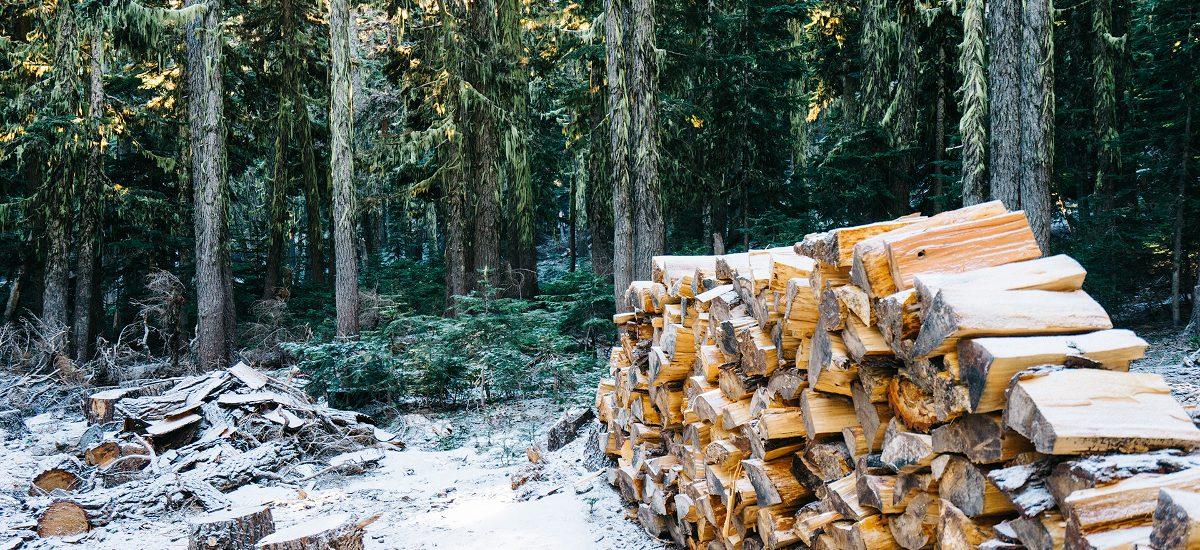 Za wycinkę drzew już wkrótce nie zapłacimy fortuny