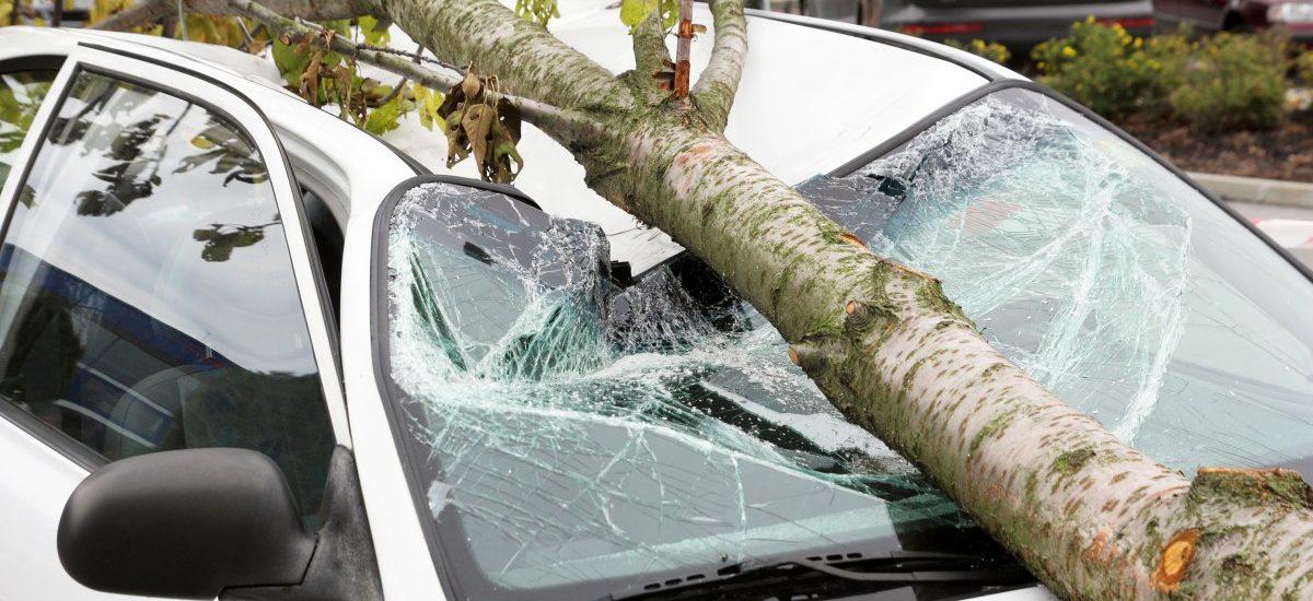 Kto zapłaci odszkodowanie, gdy drzewo zawaliło się na dom lub samochód podczas burzy?