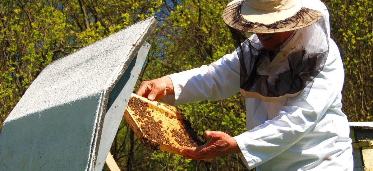 Podobno, gdy zabraknie pszczół, umrzemy. Polski sąd kazał je zagazować