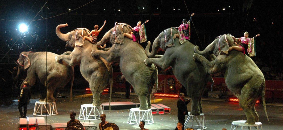 W cyrku nie zobaczymy zwierząt?