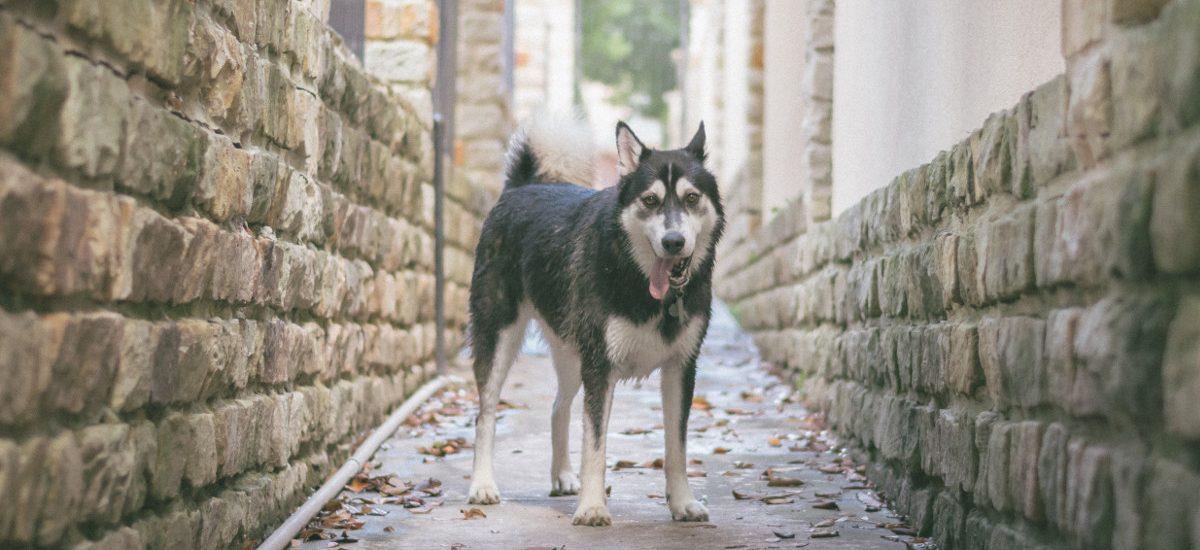 Właściciel psa nie odpowiada za pogryzienia na prywatnej posesji?