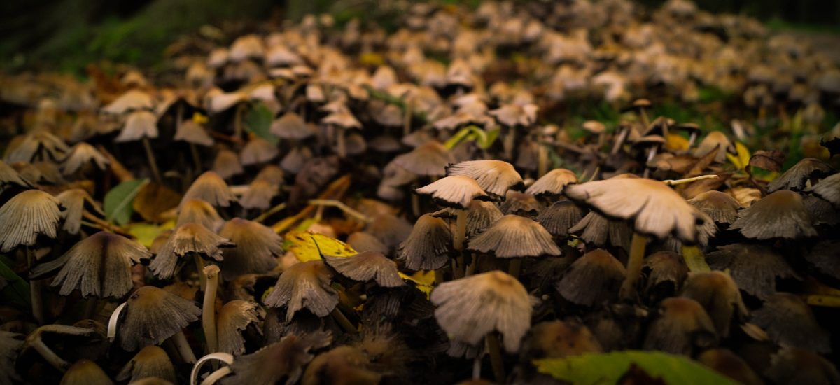 Zbieranie grzybów a prawo – generalnie wolno, ale na kilka kwestii warto uważać