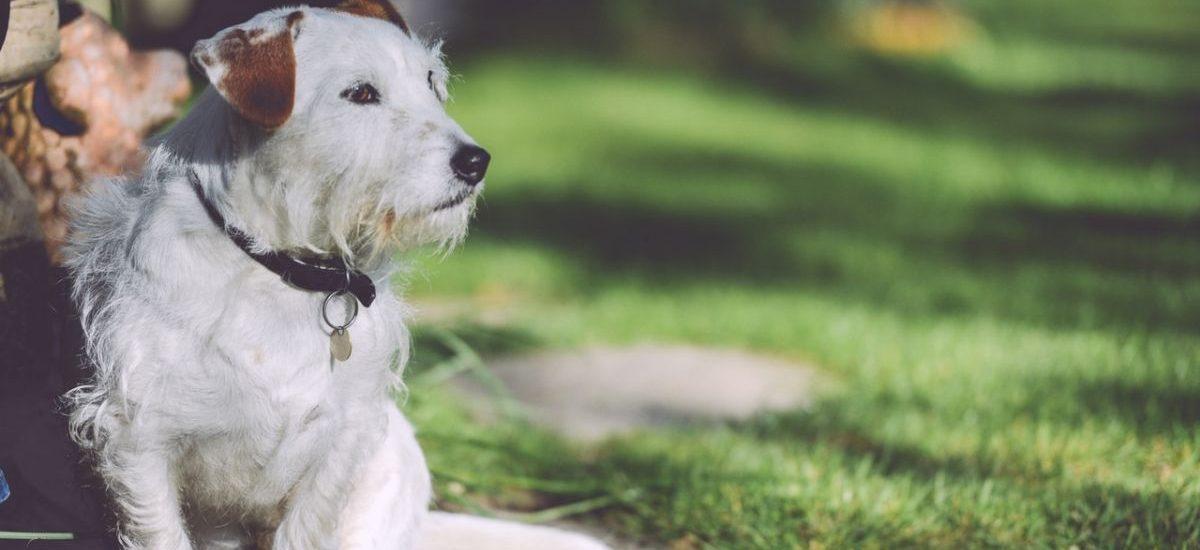 Spotkałeś porzuconego psa lub kota? Masz obowiązek zawiadomić schronisko lub policję!
