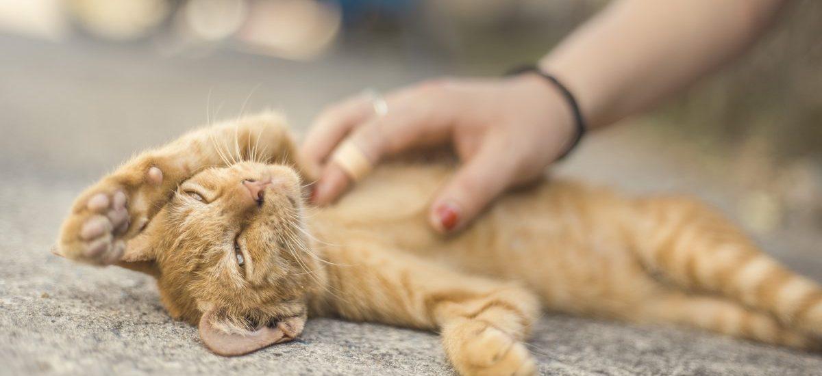 Bestialskie zabójstwo kota w Siedlcach – jaka najwyższa możliwa kara grozi zwyrodnialcowi?