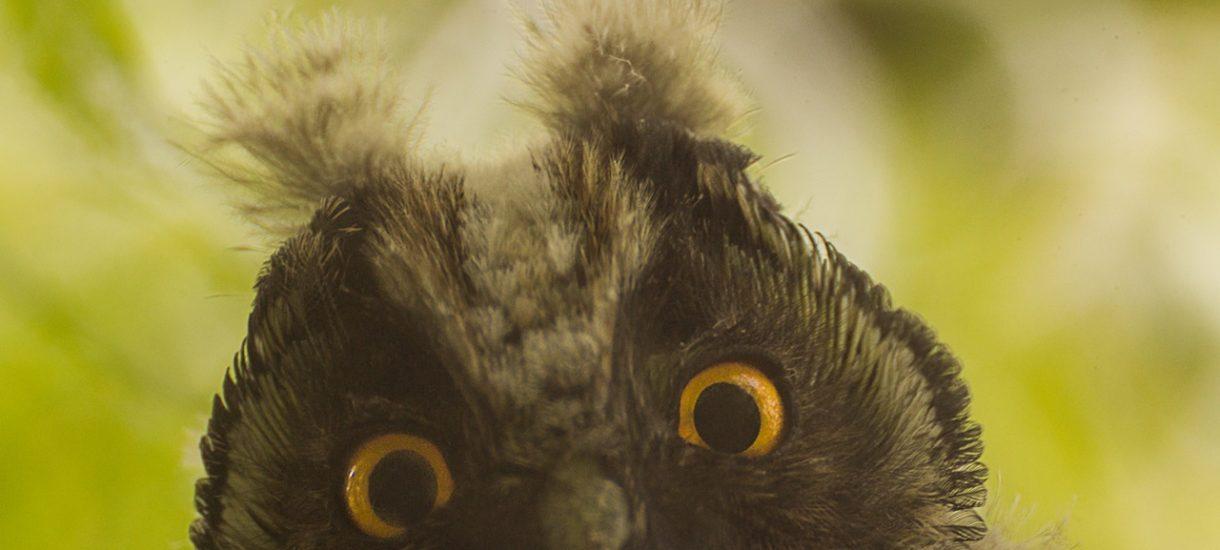 Polacy będą produkowali ptasie mleczko Angry Birds