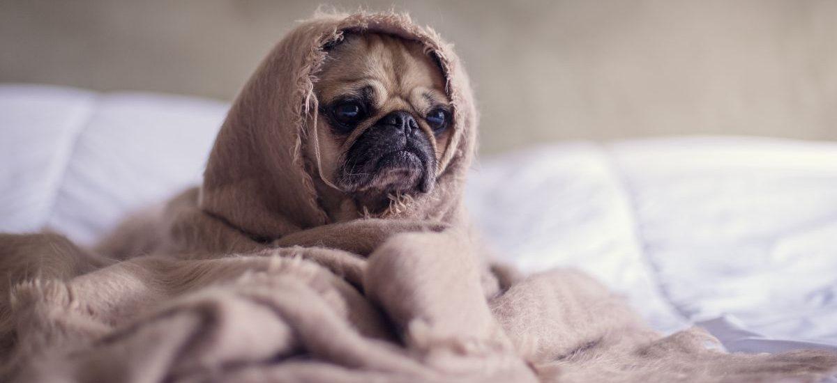 Mandat za nieuzasadnione wezwanie karetki pogotowia do… psa!