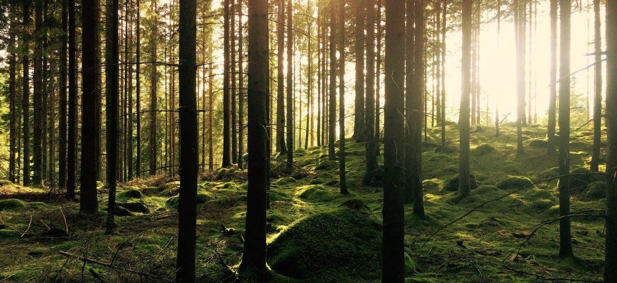 Puszcza Białowieska chroniona przez Komisję Europejską