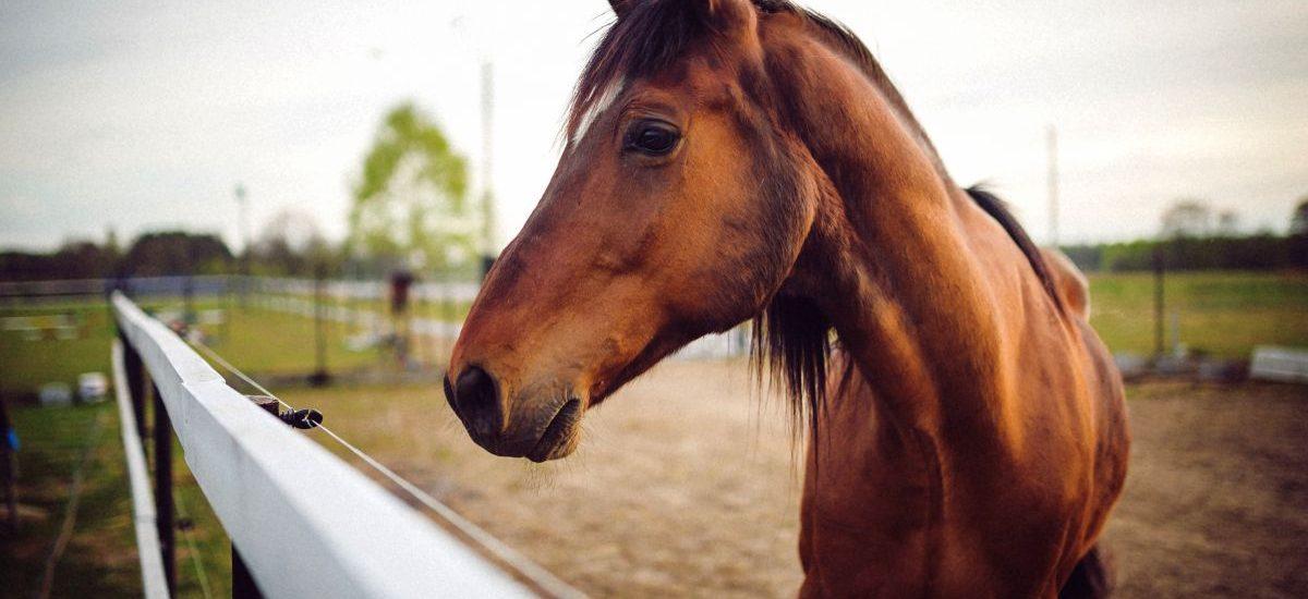 Jegomość domaga się odszkodowania za konia zarekwirowanego w 1939 roku
