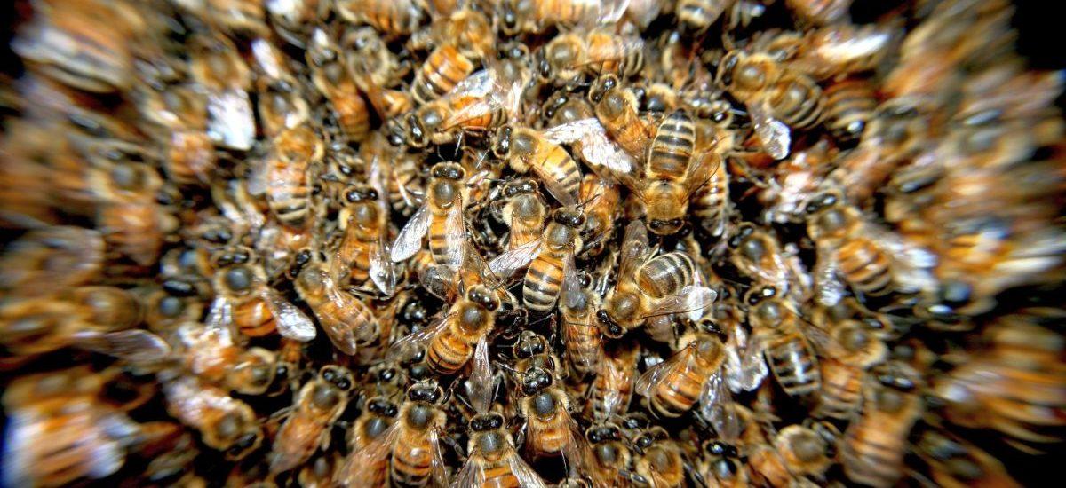 Niemal półwieczna pasieka do likwidacji przez alergię sąsiada