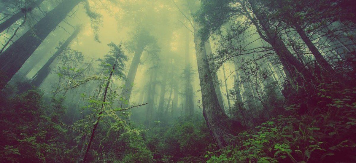 Przez kilka tygodni mieliśmy w Polsce odrobinę wolności, ale drzewa okazały się jednak ważniejsze