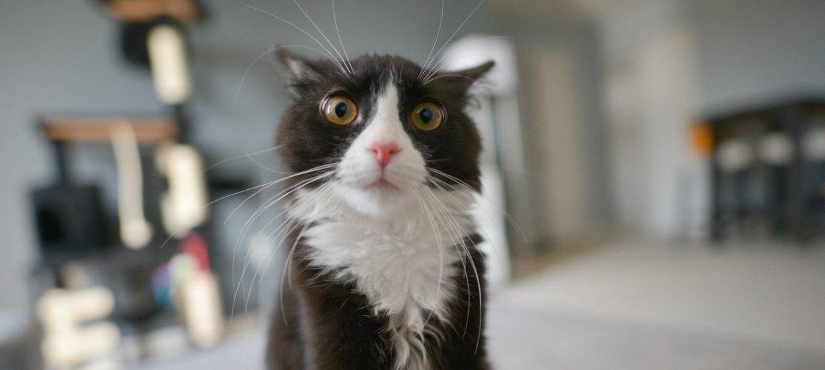 Zgubili kota, którego mieli przetransportować. Zaproponowali właścicielce rekompensatę – 8 złotych za kilogram