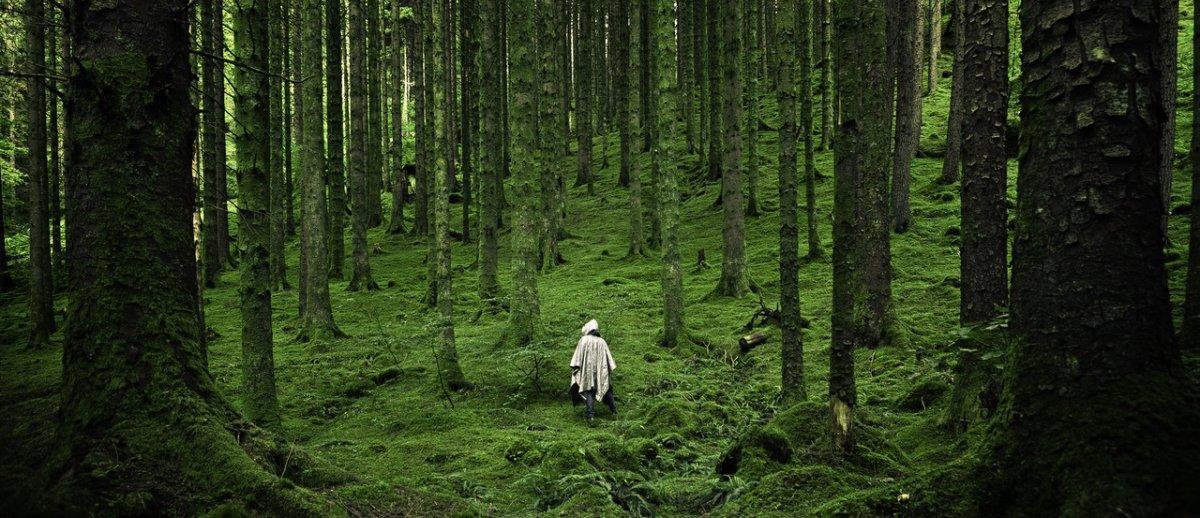 W Norwegii już nigdy żadne drzewo nie zostanie pozbawione życia. Zakażą też diesla i…