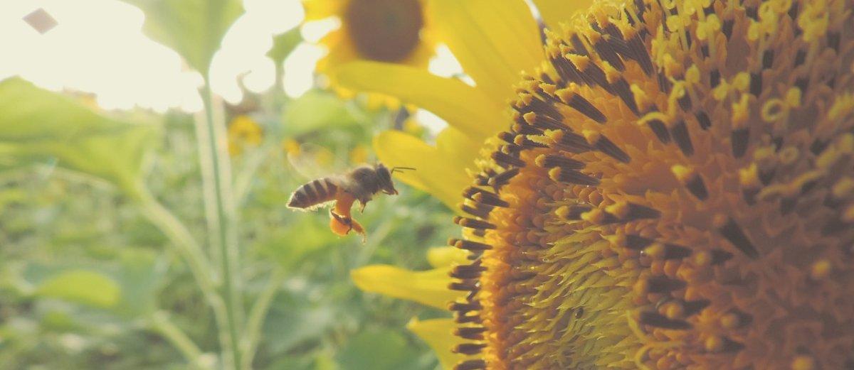 2000 złotych rekompensaty za użądlenie pszczoły