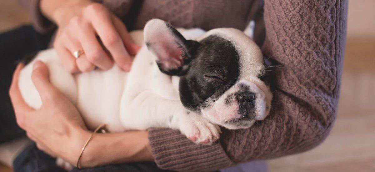 Groby naszych psów nie są niestety zbyt dobrze chronione przez prawo