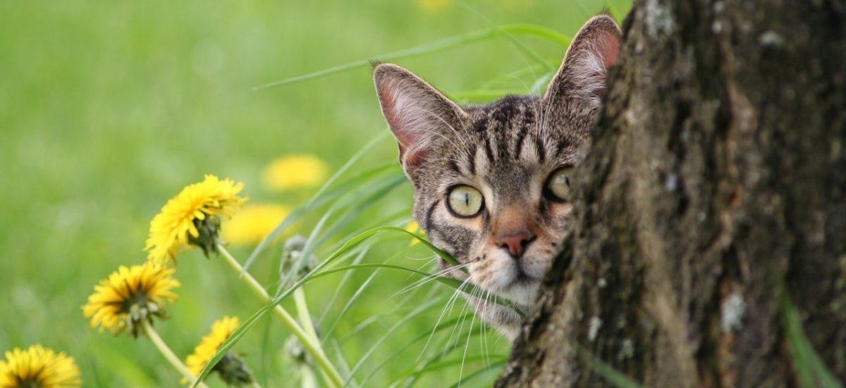 Kot notorycznie wyjadał sąsiadowi rybki. Sierściuch i właściciel zapowiadają odwołanie od wyroku