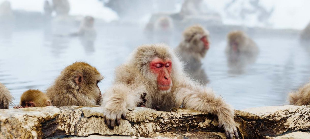 Czy małpie przysługują prawa autorskie do selfie? Proces o to doprowadził właściciela aparatu do bankructwa