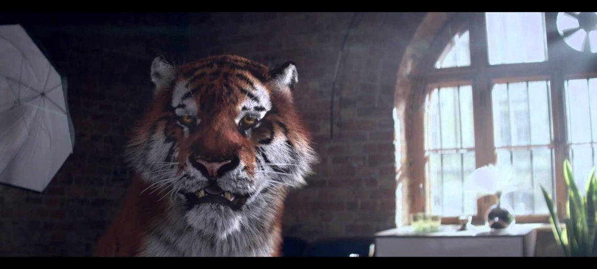 Czy Tiger poniesie prawne konsekwencje za reklamę? Nikłe szanse